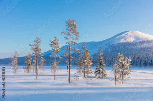 Foto op Aluminium Blauw Northern winter landscape - pine trees, forest and mountain