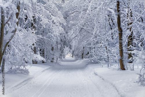 zimowy-krajobraz-gorski-drzewa-w-lesie-lub-parku-pokryte-szronem-i-sniegiem