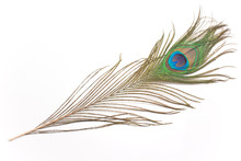 Peacock Feather Isolated On Wh...