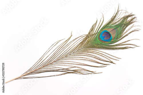 Photo sur Aluminium Paon Peacock feather isolated on white