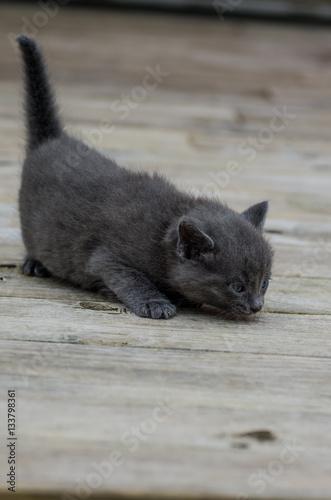 Photo  Little kittens