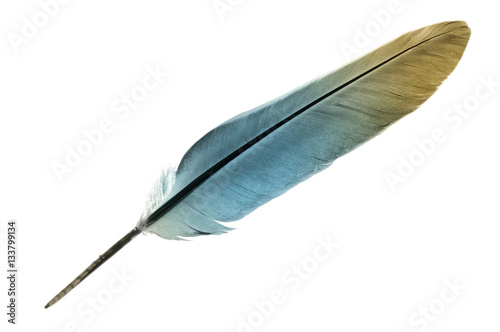 Single feather in turquoise isolated on a white background