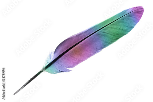 Single feather in rainbow colours isolated on a white background