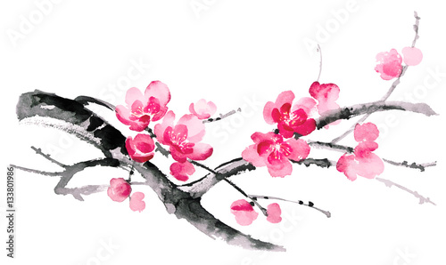 Ink illustration of blooming branches of cherry. Sumi-e, u-sin, gohua painting style. Silhouette made up of brush strokes isolated on white background. © artsklad