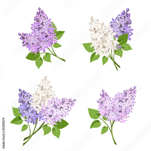Vector set of branches of purple and white lilac flowers isolated on a white background.