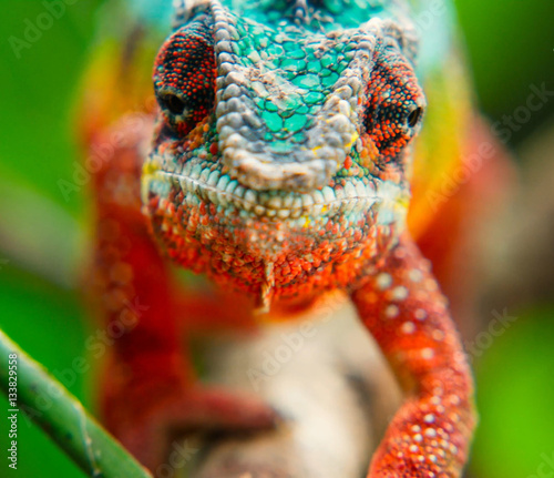 Spoed Foto op Canvas Kameleon The head of a chameleon in the vicinity