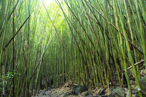 Hawaii Bambus Bambuswald Usa Insel Sonne Wald Weg Pfad
