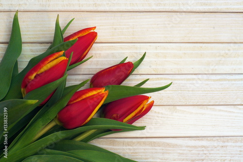 Fototapeta Beautiful red tulips on white wooden table obraz na płótnie