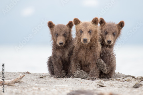 Fotografie, Obraz  Portrait of an adorable little bears