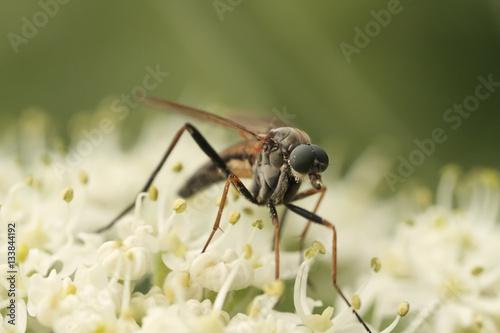 Fotografía  foto macro de un insecto posado sobre una flor o planta en el pirineo aragonés e