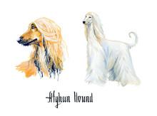 Afghan Hound. Gouache Hand Drawn Illustration.