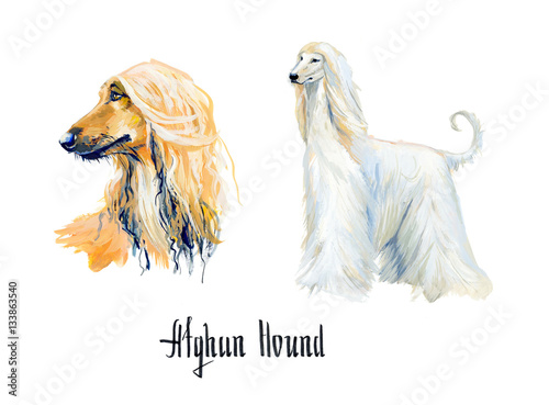 Afghan Hound. Gouache hand drawn illustration. Wallpaper Mural