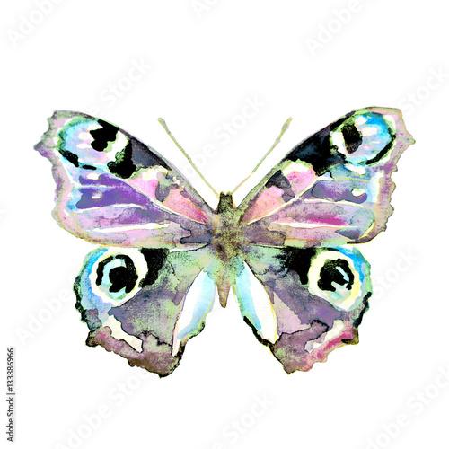 Plakat motyl, akwarela, na białym