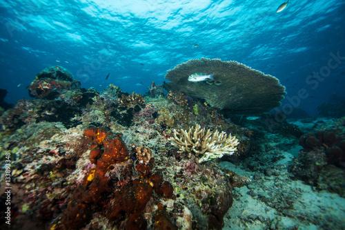 Foto op Plexiglas Panoramafoto s Underwater landscape. Similan islands. Andaman sea. Thailand.