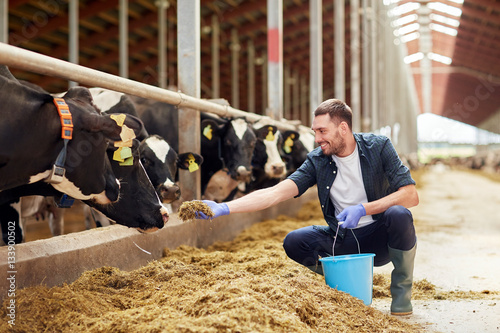 man feeding cows with hay in cowshed on dairy farm Tapéta, Fotótapéta