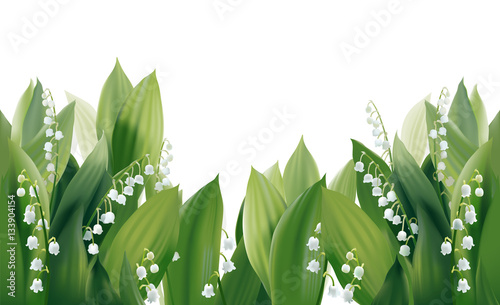 Obraz Convallaria majalis - Lilly of the valley.