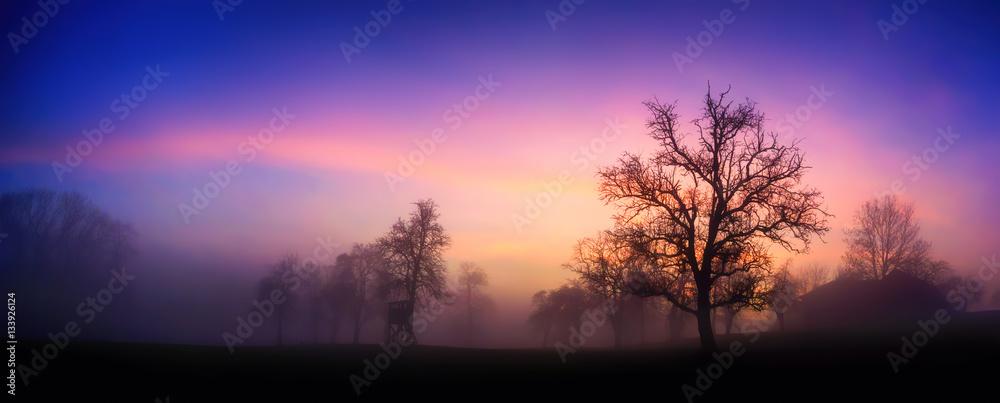 Fototapeta Bunte Dämmerung am Land im Winter, mit Silhouetten der Bäume und rosa Wolken