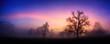 Bunte Dämmerung am Land im Winter, mit Silhouetten der Bäume und rosa Wolken