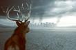 Einsamer Hirsch sieht zerstörte Stadt