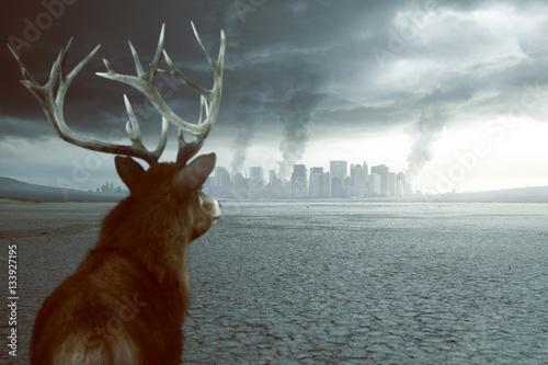 Fotografie, Obraz  Einsamer Hirsch sieht zerstörte Stadt