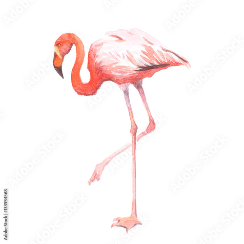 Foto op Aluminium Flamingo Watercolor realistic flamingo bird tropical animal isolated on a white background illustration.