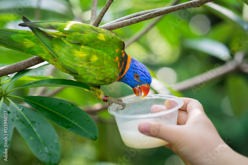 Photo  Parrot is feeding in Singapore zoo