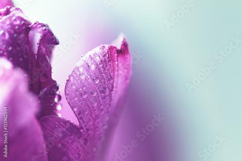 In de dag Macrofotografie Closeup of wild flower with water drops and beautiful light. Cop