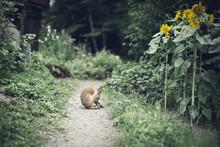 Rabbit Of Footpath Against Plants