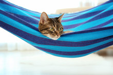 Adorable Cat Lying In Blue Hammock At Home