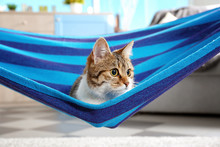 Adorable Cat In Blue Hammock At Home