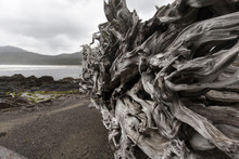 Driftwood Roots On West Coast Beach