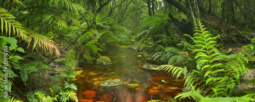 Photo  River through rainforest in the Garden Route NP, South Africa