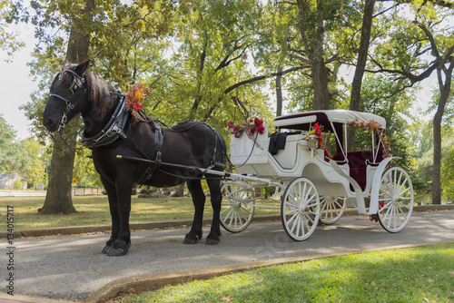 Fotografie, Obraz  Horse and Carriage Ride in a forest