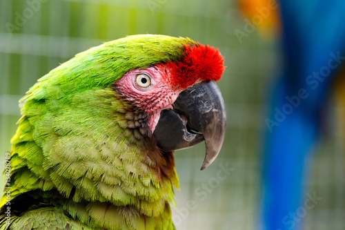 Photo Parrot standing and watching you