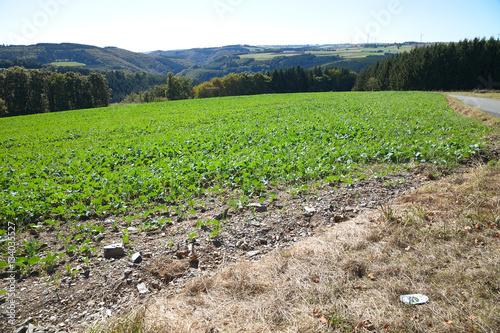 Fotografia  Landschaft in der Eifel. Blick auf Luxemburg