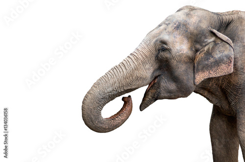 Deurstickers Olifant Elephant portrait. Elephant with open mouth. Elephant on a white background.