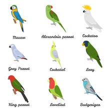 Set Of Color Flat Parrots Icons With Their Names