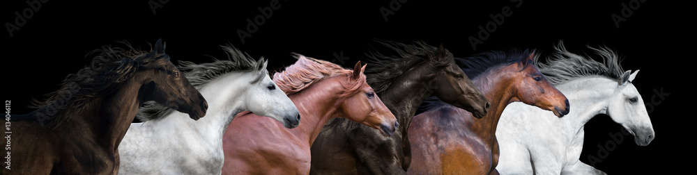 Obraz Six horses portraits isolated on a black background fototapeta, plakat