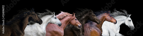 Poster Paarden Six horses portraits isolated on a black background