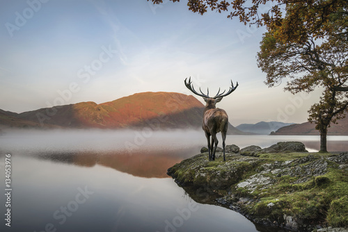 Foto auf Leinwand Hirsch Stunning powerful red deer stag looks out across lake towards mo
