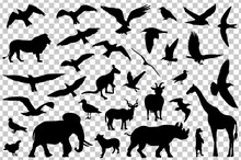 Set Of Animals Silhouettes Isolated. Vector Illustration