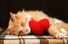 Golden Red Cat Asleep Hugging A Small Plush Heart Toy.
