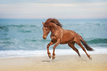 Beautiful Red Horse Galloping ...