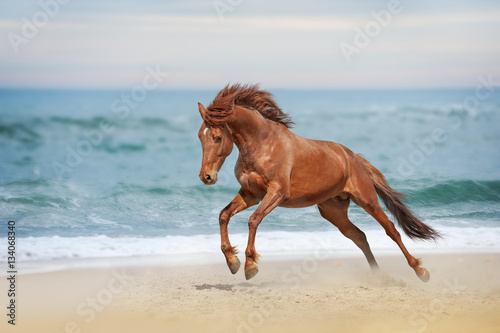Fotografía  Beautiful red horse galloping in a phase jump developing mane on solar background refreshing sea