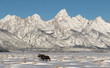 canvas print picture Moose and Tetons