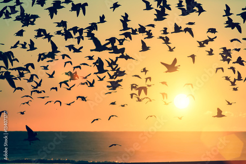 Photo  A flock of birds over the Atlantic ocean during sunset