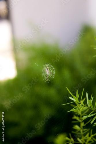 Fotografie, Obraz  tiny spiderweb on its  green habitat