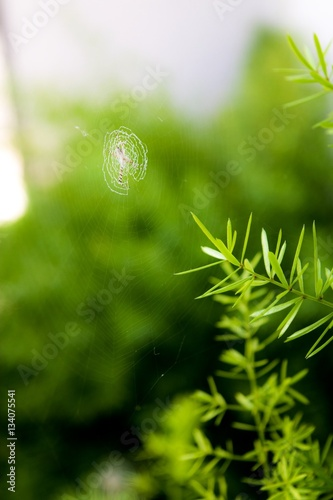 Photo tiny spiderweb on its  green habitat