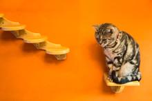 Cat Sitting On Wood Shelf With Orange Background