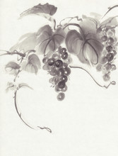 Grapes On White Background Ink Painting